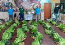 Exitosa comercialización de bolsones saludables de la Agricultura Familiar